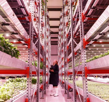 Kate Hofman inspects the salad crops in GrowUp's Beckton industrial unit. Image: Miles Willis