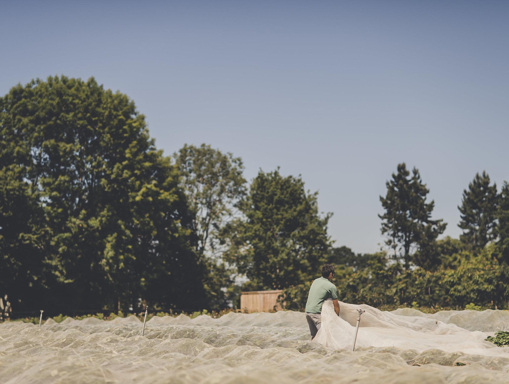 Daylesford's market garden - Bentley Tour