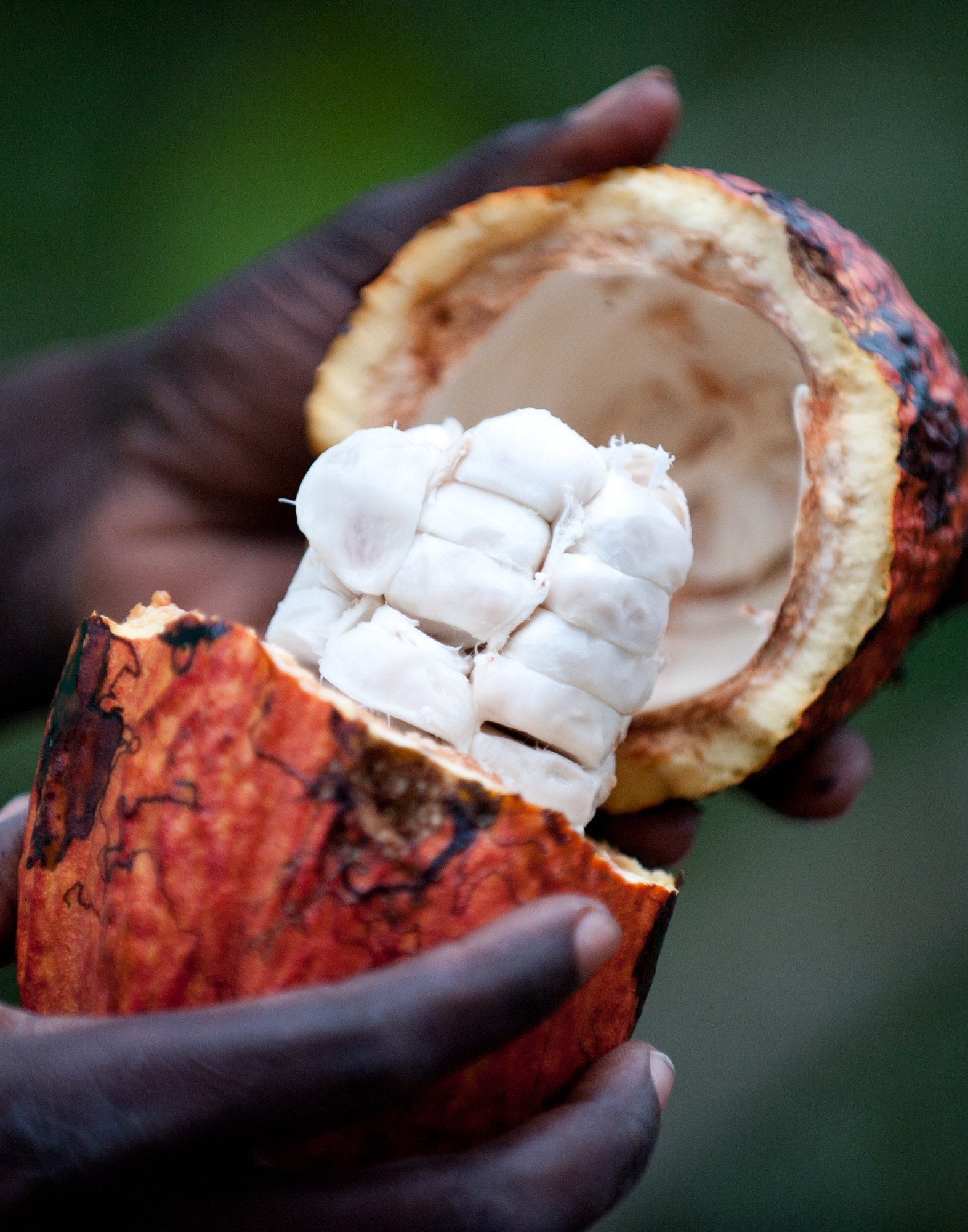 São Tomé & Príncipe produces some of the world's finest cacao beans