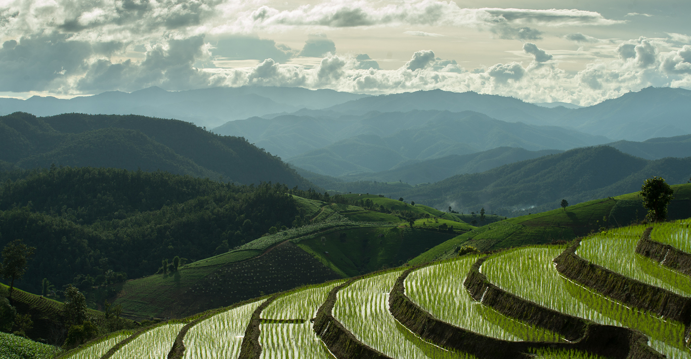 The rice fields around Chiang Mai, Thailand