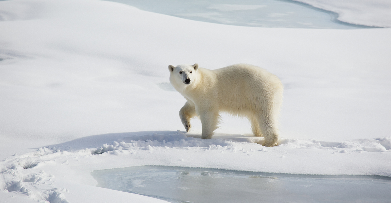 Churchill, Canada, is the 'polar bear capital of the world'