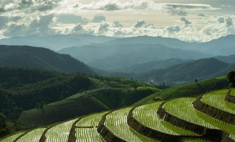 The rice fields around Chiang Mai, Thailand