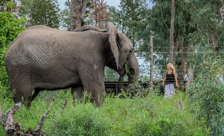Françoise Malby-Anthony with Frankie, the current matriarch of the elephant herd at Thula Thula. Photo by Kim McLeod