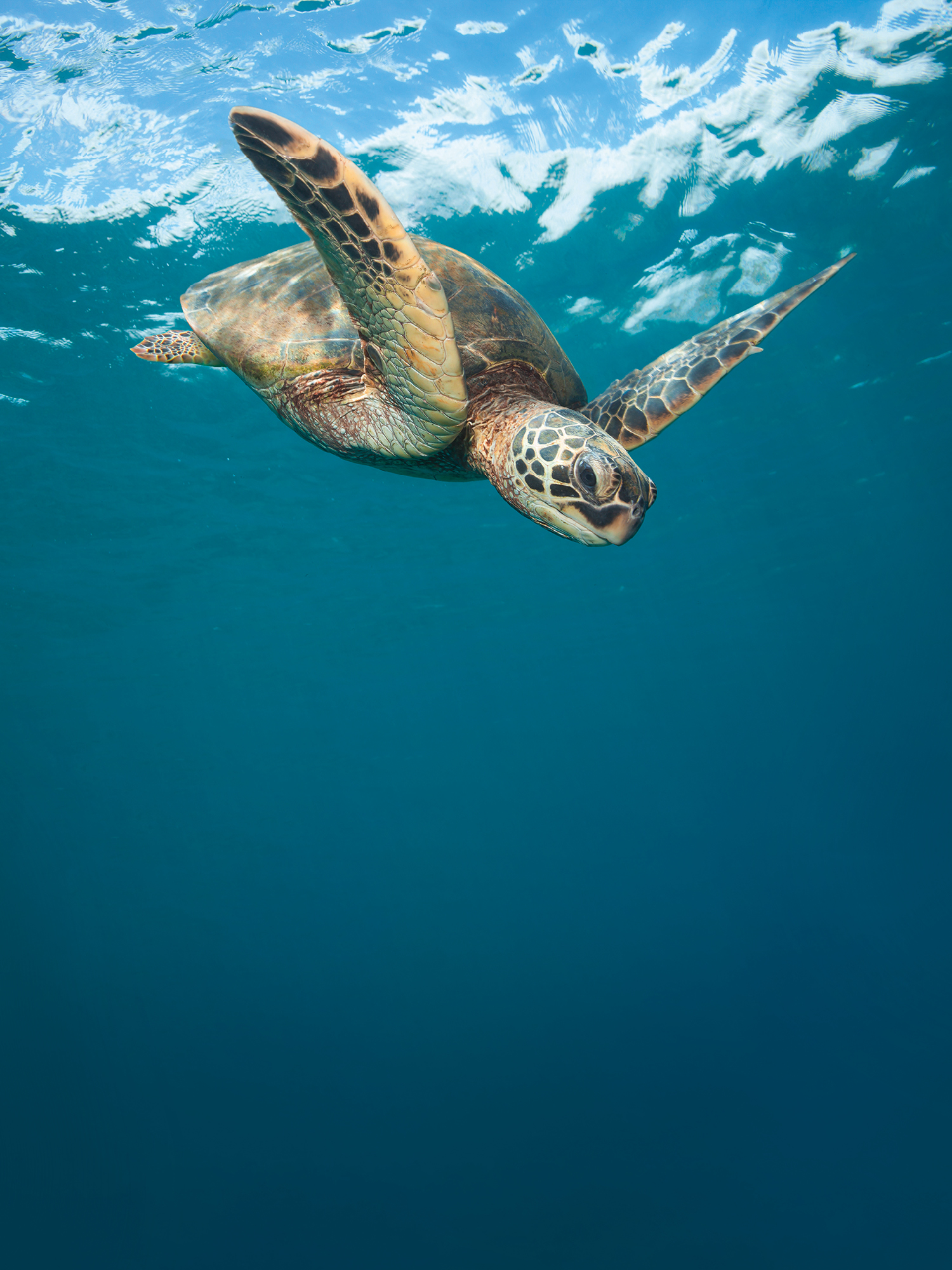 Certina supports sea turtle conservation
