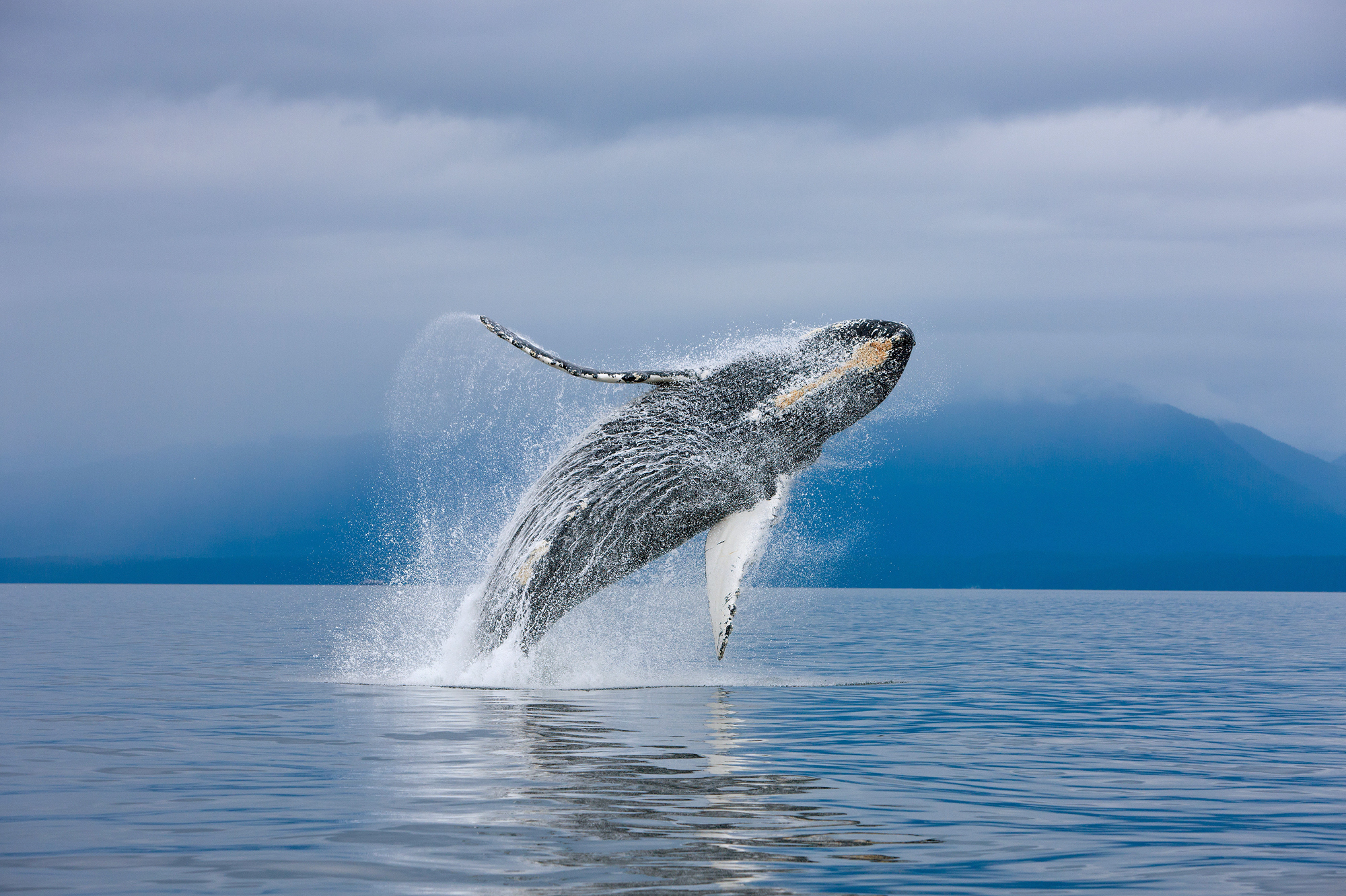 The whale's behaviour is observed before participants dive in to 'meet' them