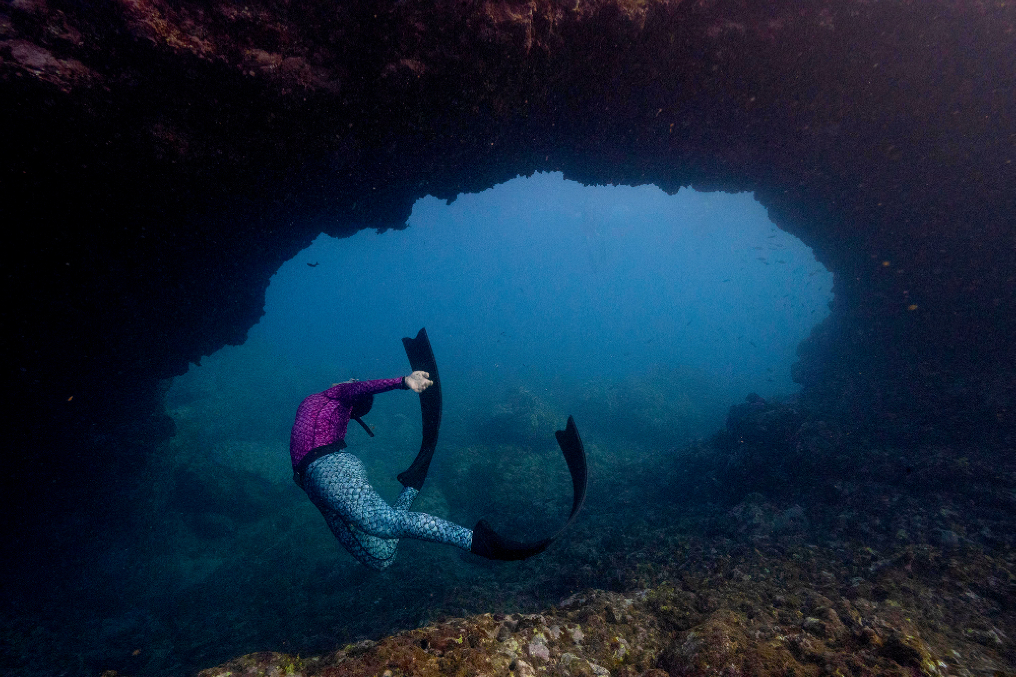 Guests receive free-dive training between marine encounters