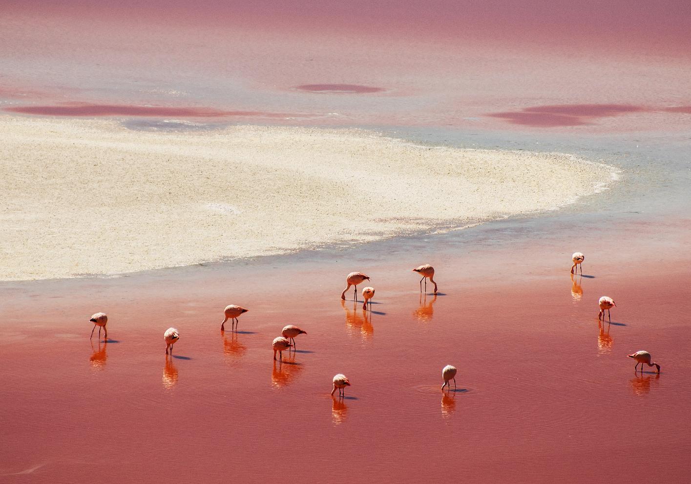 Pink flamingos on the Salar de Atacama salt flats
