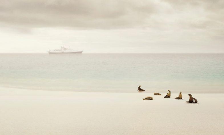 Enchanted Islands No2 8x10 Andrea Hamilton Hamilton